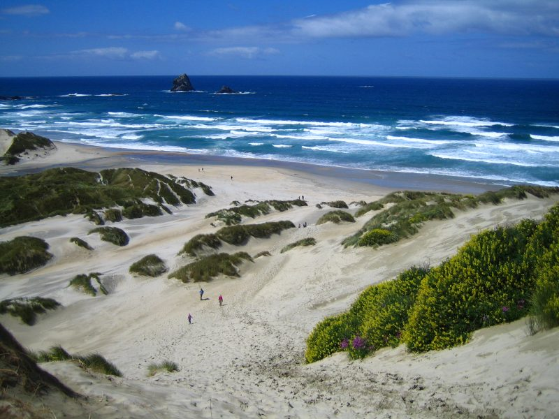 Neuseeland Rundreise Sandfly