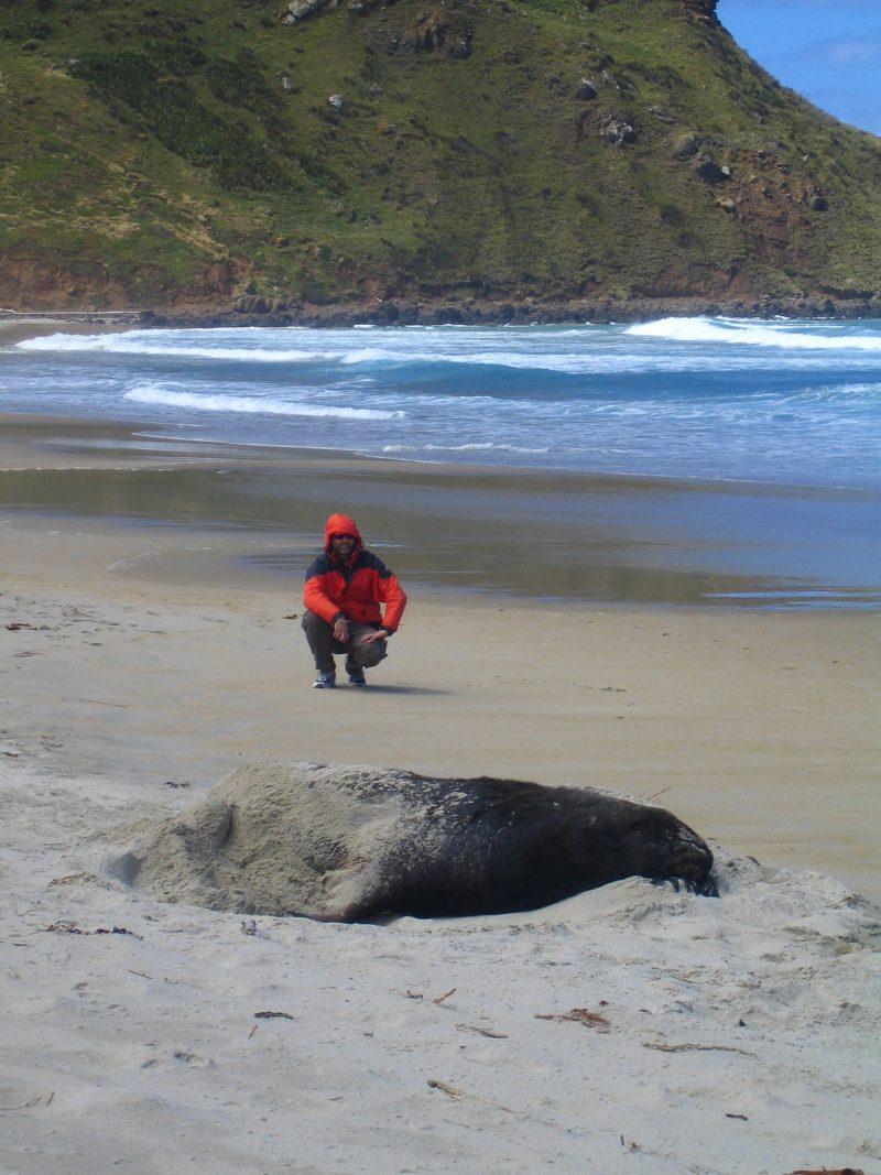 Neuseeland Rundreise Seelöwe