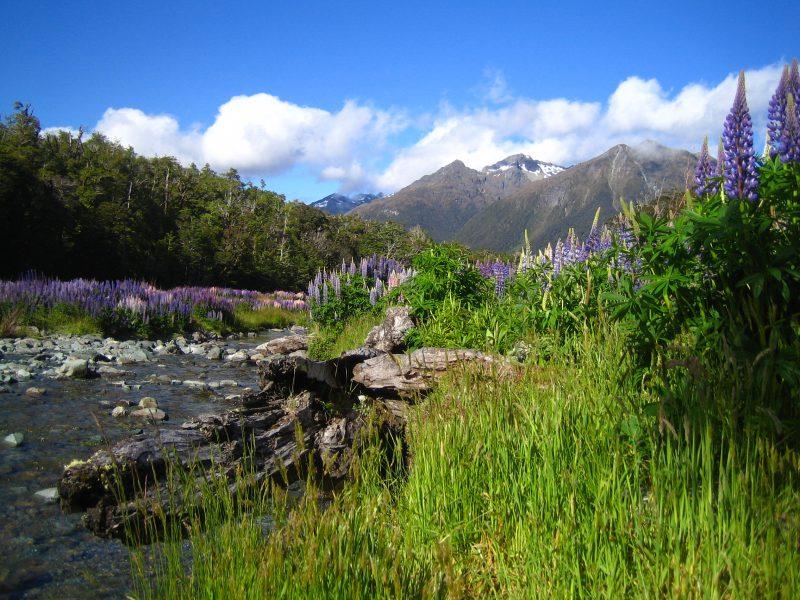 Neuseeland Rundreise Cascade