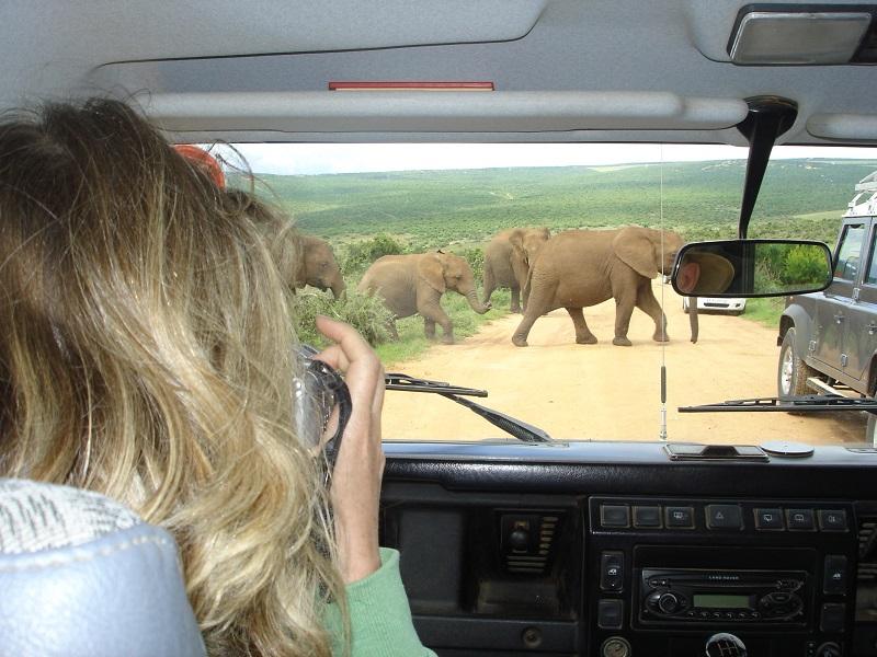 Kapstadt Garden Route Addo Elephant Park @awayonwheels