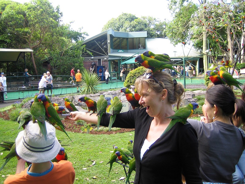 Daytrips Brisbane_Currumbin Lorikeets