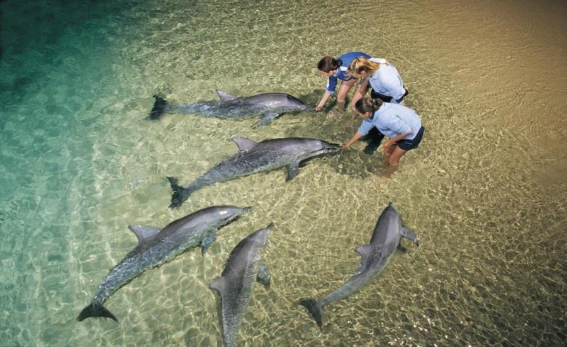Daytrips Brisbane_Moretin Island Delfinfütterung
