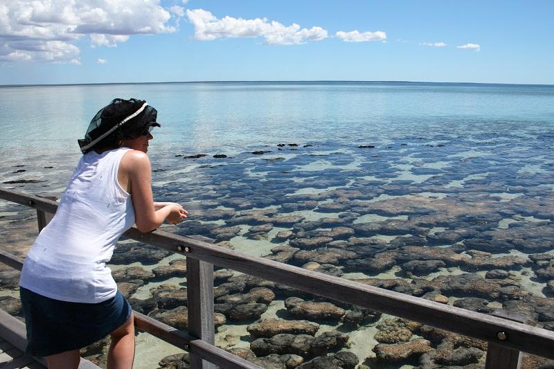 Westaustralien Roadtrip Perth Exmouth Stromatholithen Shark Bay