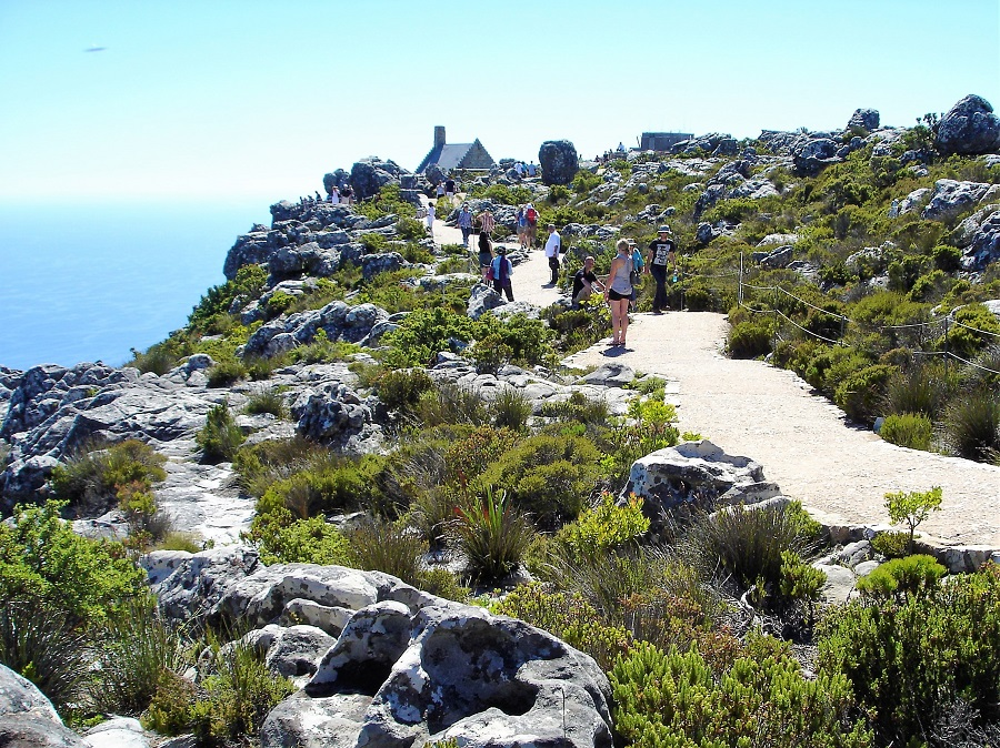 Kapstadt Highlights Tafelberg Wanderwege