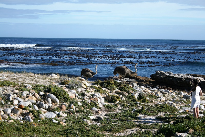 Kapstadt Highlights_Cape Point Emus